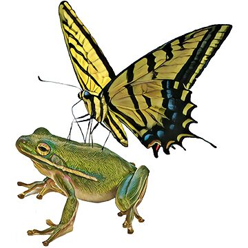 The FROG & BUTTERFLY by Matterotica