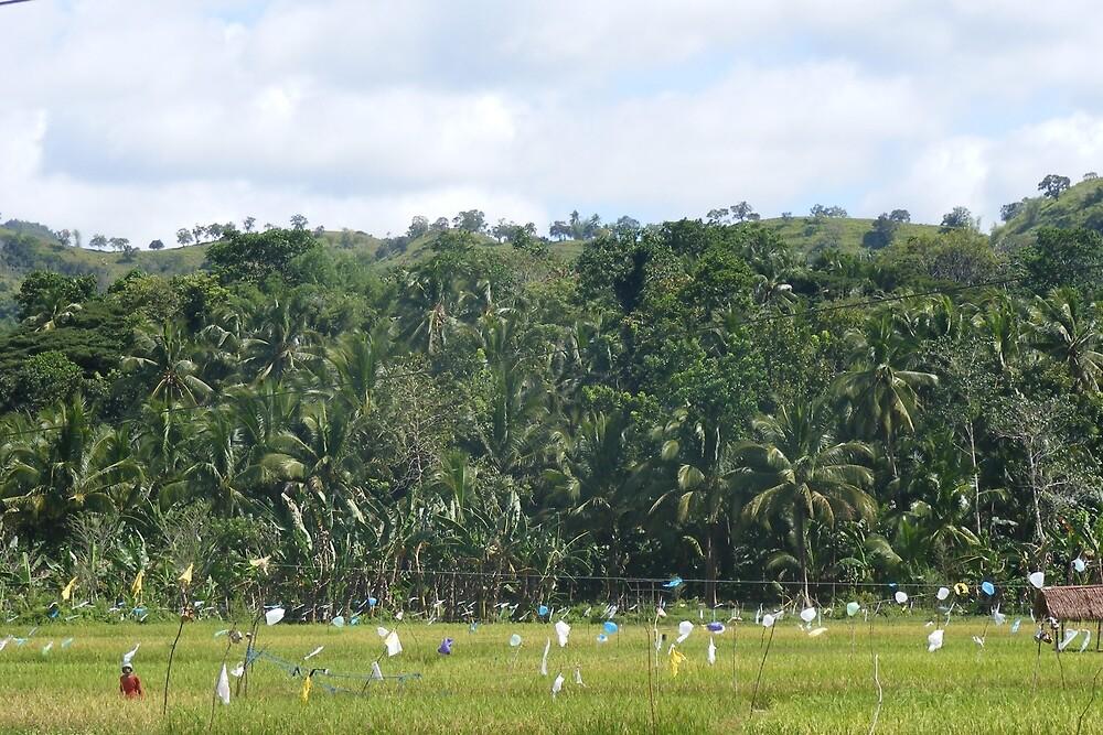 a desolate Timor-Leste landscape by beautifulscenes