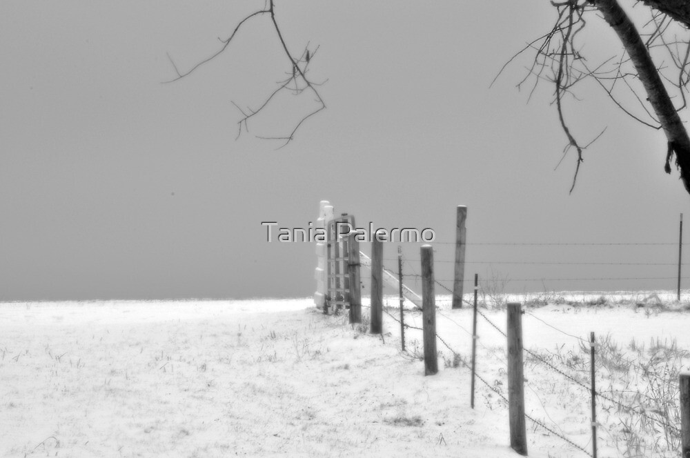 beyond the fence line by Tania Palermo