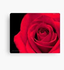 Melodious Rose Canvas Print
