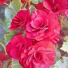 Vintage Roses by Jessica Manelis