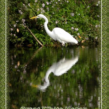 Great White Heron Hunting at Homosassa Springs by TravlynWomyn