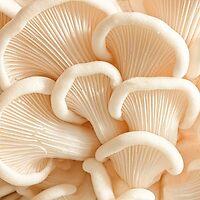 Marvelling the Mushroom - II by Marilyn Cornwell