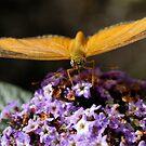 Enjoying Nectar by Corkle