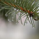After the Rain by Corkle
