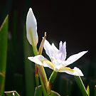 Flower by Vicki Hudson