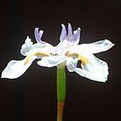 A Flower by Vicki Hudson
