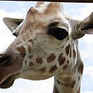 Giraffe by Vicki Hudson