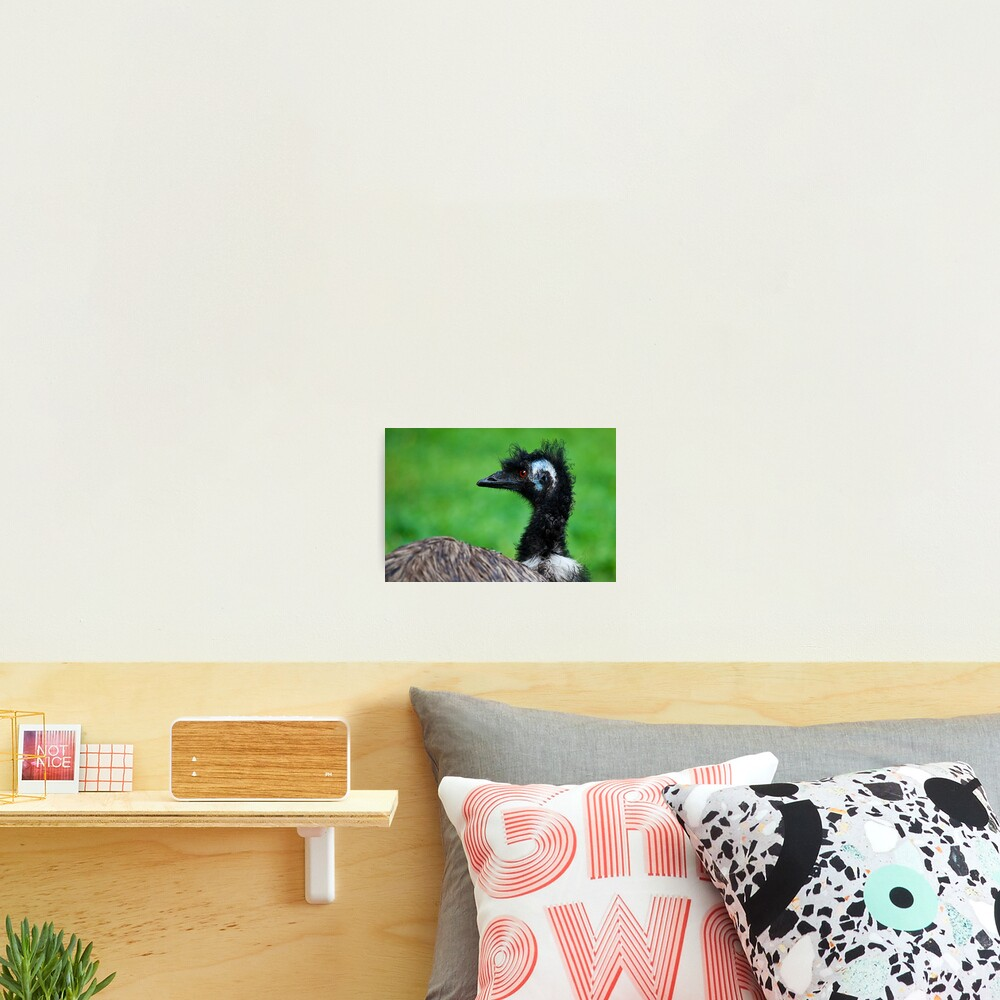 Emu Photographic Print