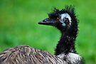 Emu by Stuart Robertson Reynolds