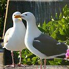 Seagull pair by Vicki Hudson