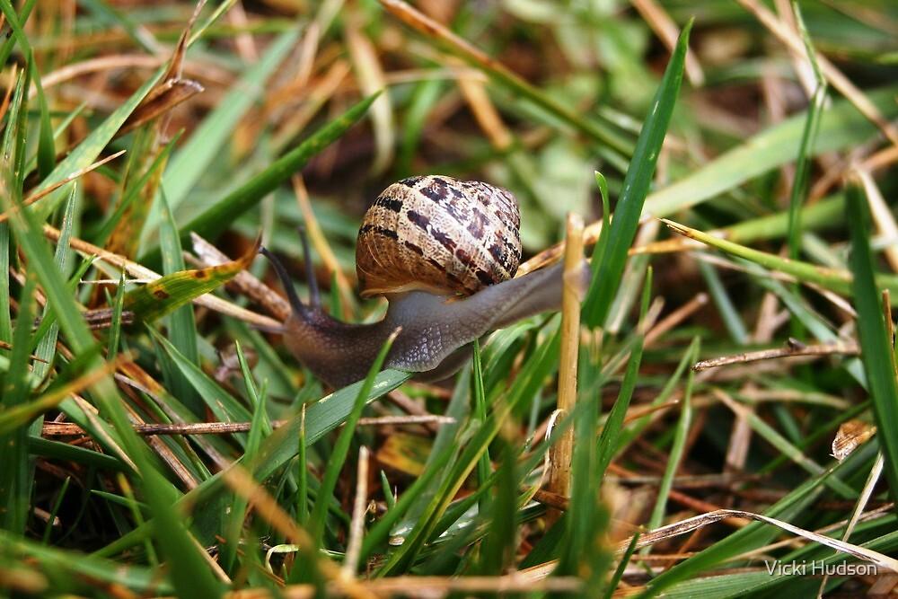 Snail in grass by Vicki Hudson
