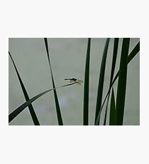 Dragonfly Sihouette Photographic Print