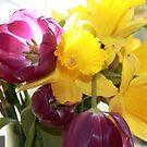 Tulips by Vicki Hudson