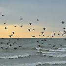 Evening Flight by Nancy Barrett