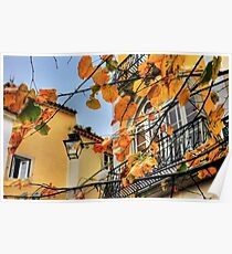 Sintra leaves... Poster