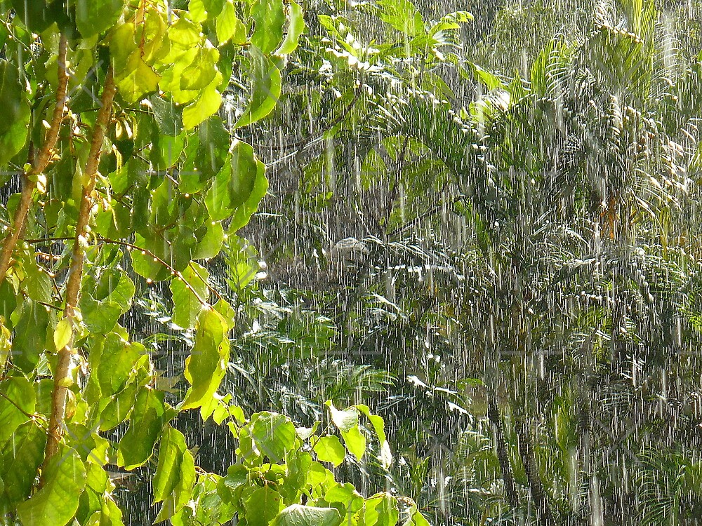 Tropical shower by Linda Bianic