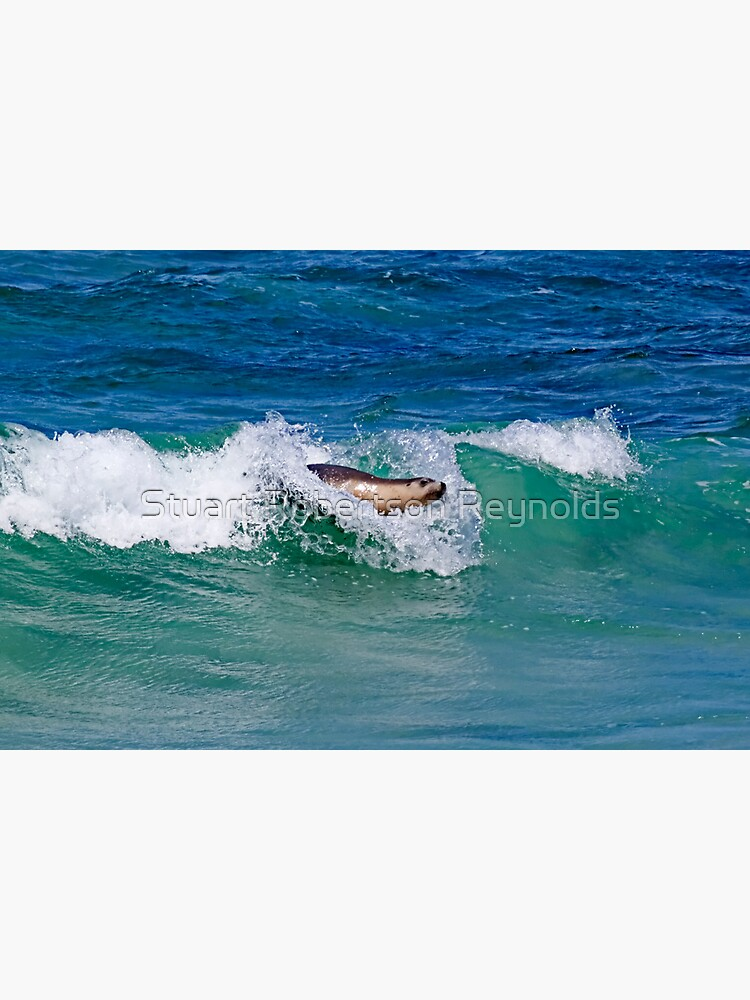 Surfing Sea Lion by Sparky2000