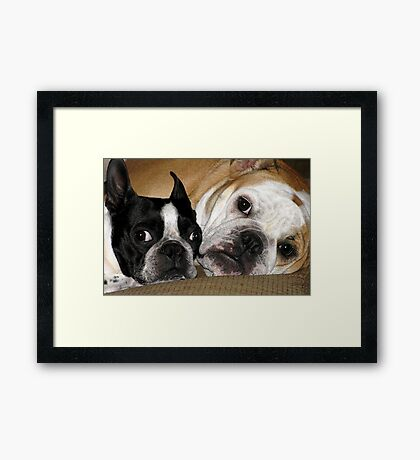 Two of a kind.... Framed Print