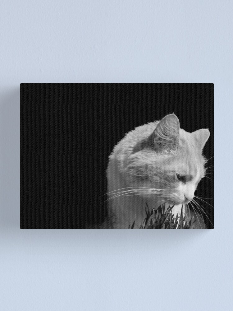 Alternate view of Cat'n Grass 2 Canvas Print