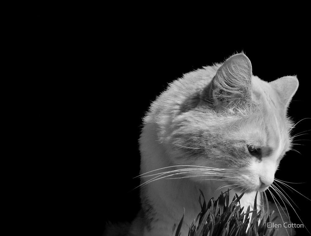 Cat'n Grass 2 by Ellen Cotton