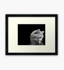 Cat'n Grass 2 Framed Print