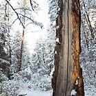 Winter Contrast by James Farnan