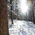 Winter Sun by James Farnan