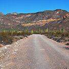 The Sonoran Desert by Barbara Manis