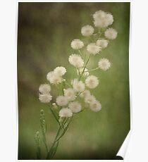 Wonderful Weeds Poster