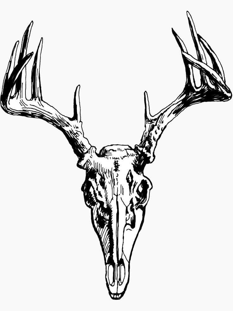 skully de wolfandbird