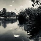 Merri Creek Coburg 3 by Angie Muccillo