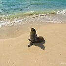 Seal on the Beach by JuliaKHarwood
