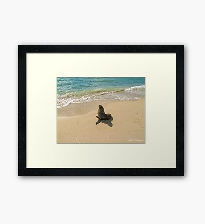 Seal on the Beach Framed Print