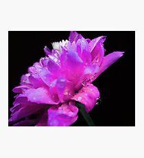 Spring flower. Photographic Print