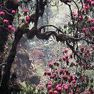 Wild woods, Nepal by photoartindia