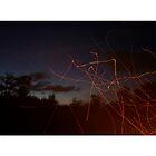 Night sparks, Tasmania by Alister A Mackinnon