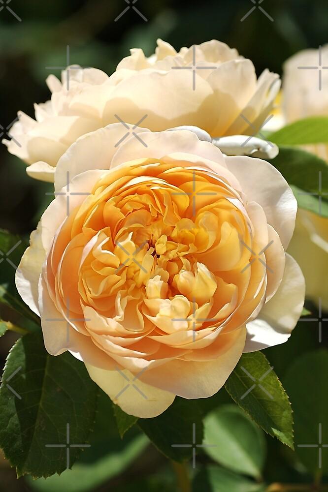 Yellow Rose Delights by Joy Watson