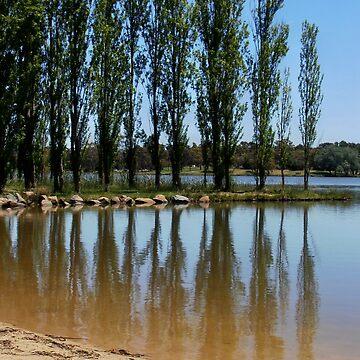 Poplars at Lake Ginninderra, Belconnen, Australia. by kaysharp