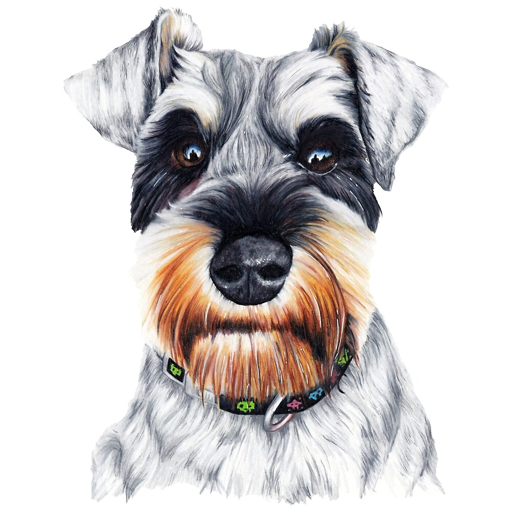 Mini Schnauzer Drawing by Apatche Revealed