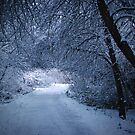 Winter Path by Rich Summers