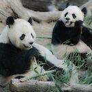 Panda Lunch by Dawn van Doorn