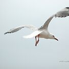 Gull In Flight © by Vicki Ferrari