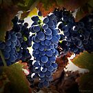 Grapes by Mike Lewis