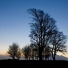 Seven Sisters by david marshall