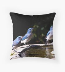 Scrubbing Up - Scrub Jays in Madera Canyon, Arizona Throw Pillow