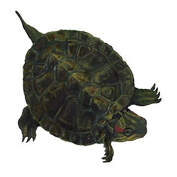 Turtle by salamandaz