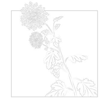 November - Chrysanthemum by maryhorohoe