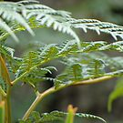 Green fern, close-up by cawh