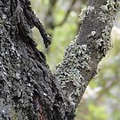 Tree re-growth, close-up by cawh